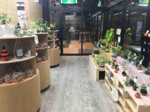 アメカゼ観葉植物コーナー