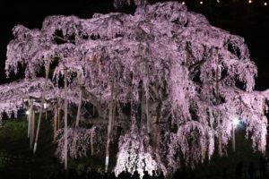 福島県の桜
