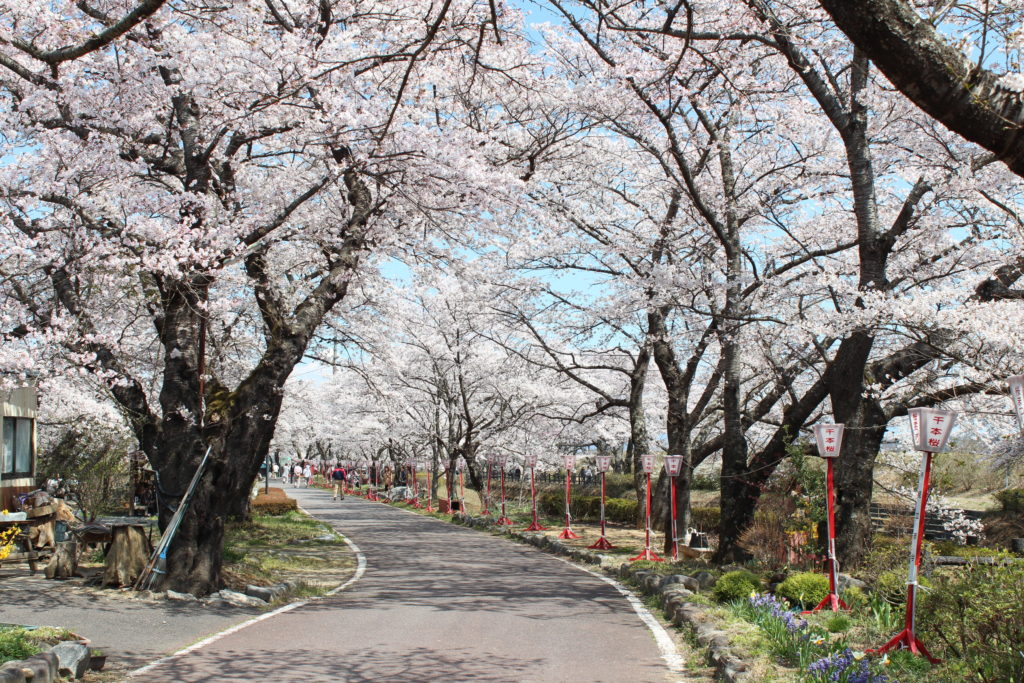 笹原川千本桜