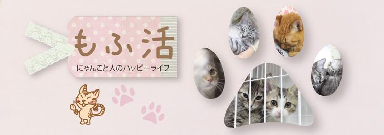 もふ活 ~保護猫との付き合い方~