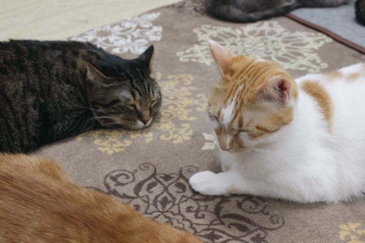 保護猫カフェ love.lab