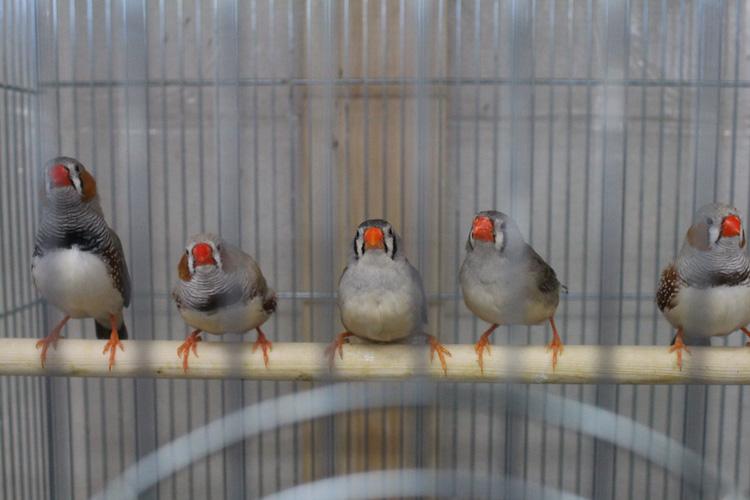 小鳥&小動物ショップ そら