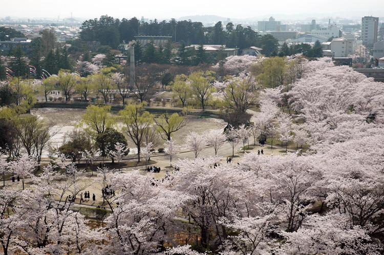 開成山公園桜