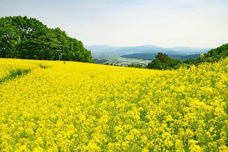 三ノ倉高原花畑(喜多方市)
