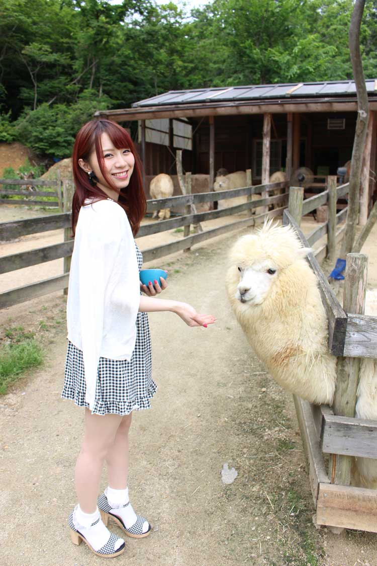 Alpaca Farm (Dude Ranch) in Koriyama City