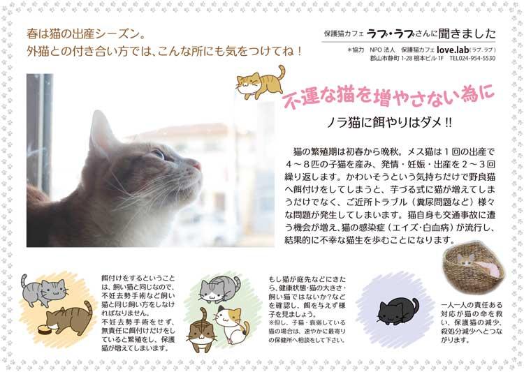 保護猫コラム202004