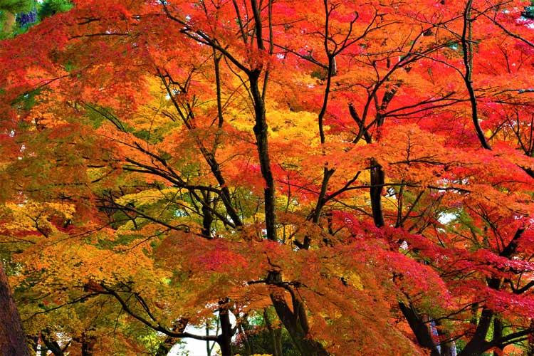 須賀川牡丹園 紅葉