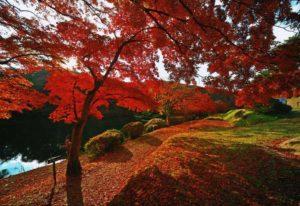 花と歴史の郷 蛇の鼻 紅葉