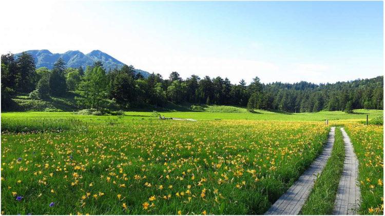 尾瀬国立公園①