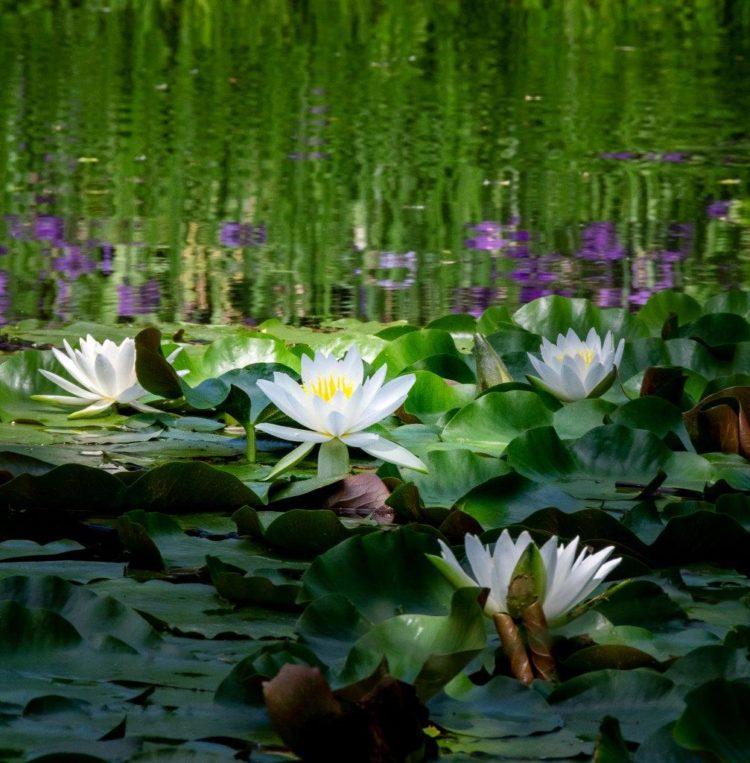 四季の里 緑水苑②